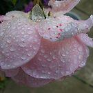 rainy days by MarianBendeth