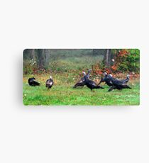 Wild Turkeys Feeding Along The Forest Canvas Print