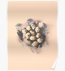 quail eggs nest Poster
