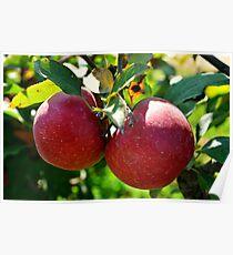 Apples, Apples, Apples Poster