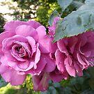 Jersey City, New Jersey, Flower Close-Up, Van Vorst Park by lenspiro