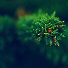 Gran by Frost Foto