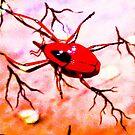 Red insect.  by ALEJANDRA TRIANA MUÑOZ