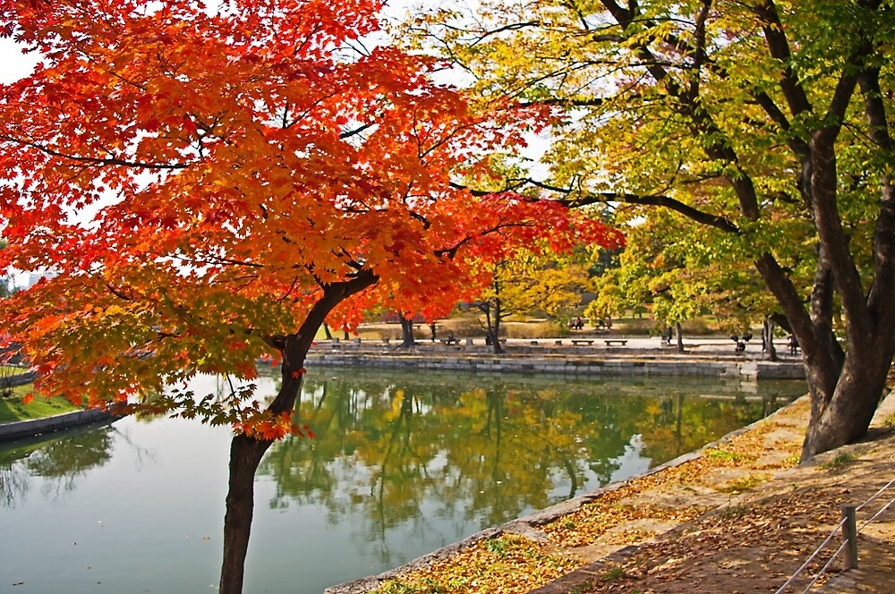 The Autumn Beauty of Hyangwonji by TonyCrehan