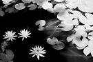 lily pond von Marianna Tankelevich