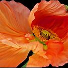 Orange Dance by DavidROMAN