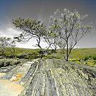 Moonee Beach Nature Reserve by janewiebenga