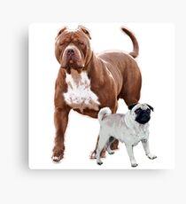 Pit bull pug 2 Canvas Print