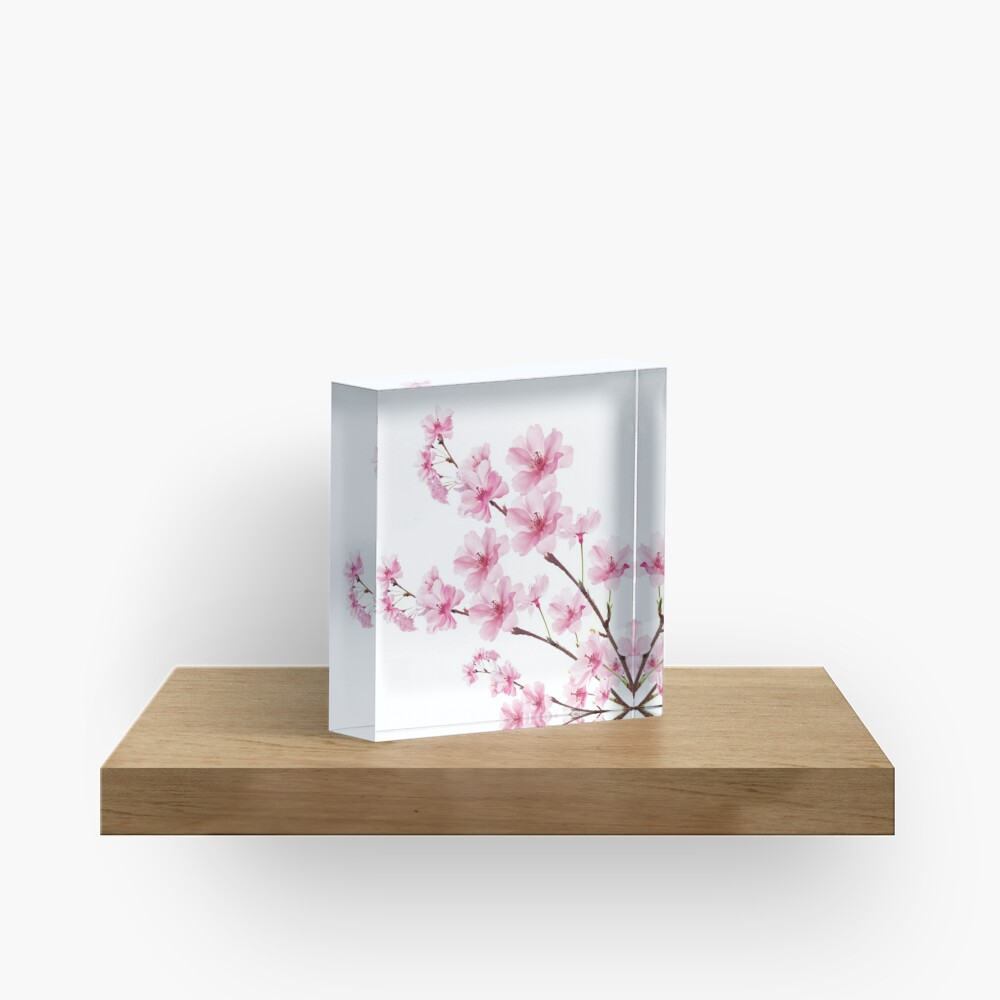 Sakura Cherry Blossom Acrylic Block