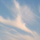 Feather Cloud by Shai Biran