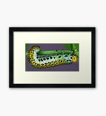 Hungry Caterpillar Framed Print