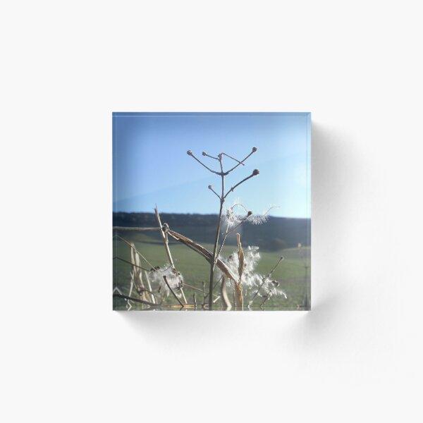 Dandelion Seeds Acrylic Block