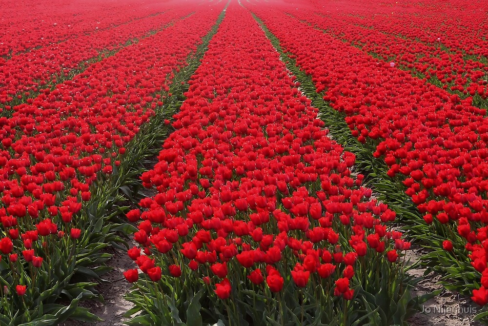 A Sea Of Red by Jo Nijenhuis