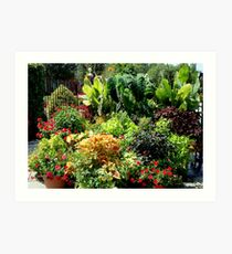 Container Garden     ^ Art Print
