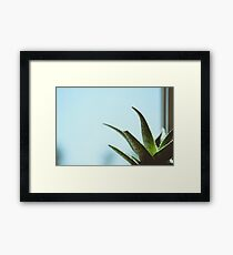 Simplistic Green and Blue Succulent Photograph Framed Print
