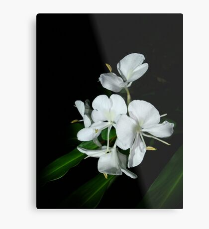 Ginger Lilies at Night Metal Print