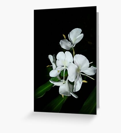 Ginger Lilies at Night Greeting Card