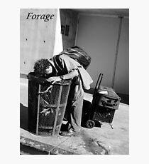 Forage Photographic Print