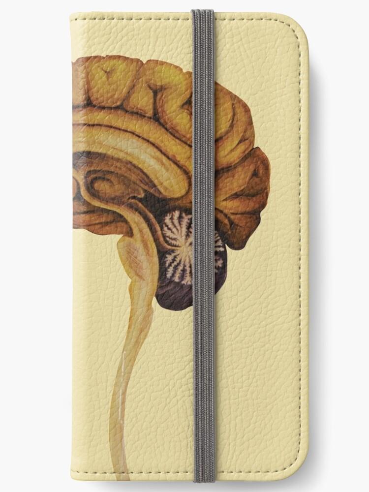 Sagittal Brain by msraz