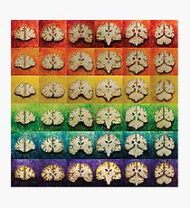 The Brain Bow Photographic Print