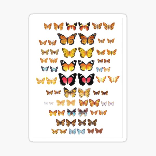 Australian Butterfly Collection Sticker
