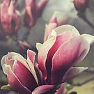 Beautiful Magnolia by Jo Williams