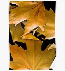 Autum Leaves Poster