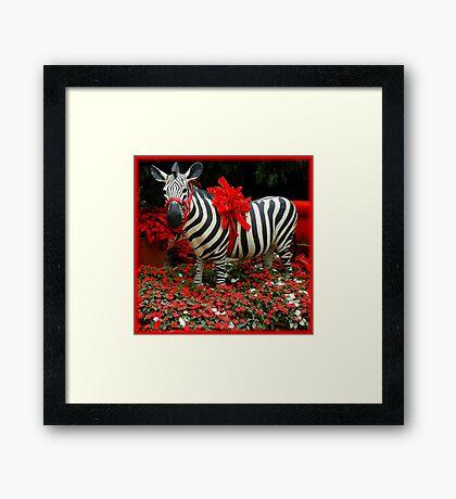 The Zebra's Mockery Framed Print