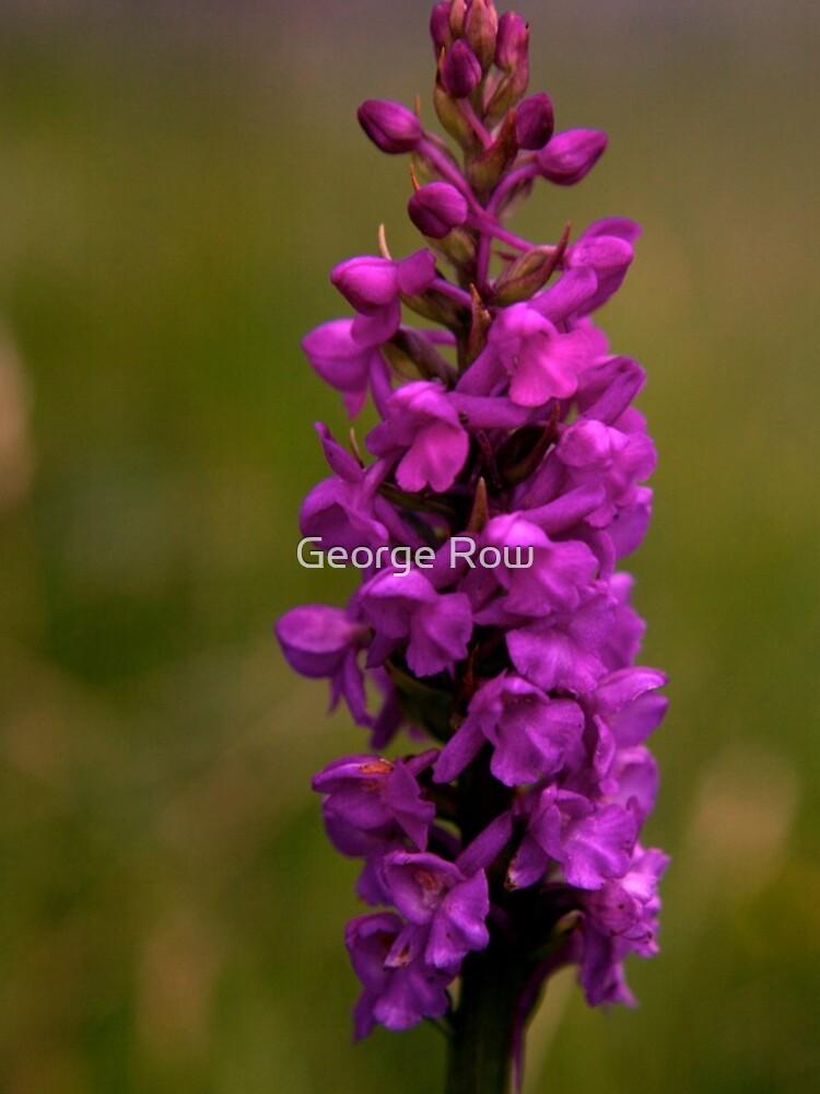 Fragrant Orchid, Dun Eochla, Inishmore by VeryIreland