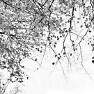 Autumn Tree in Black and White by Xoanxo