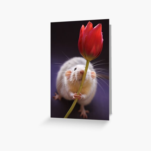 Just for you... Greeting Card