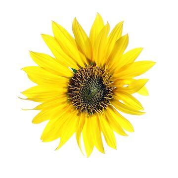 Flower by BorodinDenis