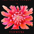 EARTH LAUGHS IN FLOWERS INSPIRATIONAL LOVE QUOTE by Nicola Furlong