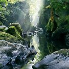 Wales - The Fairy Glen , Betws-y-Coed 2 by Angie Latham