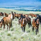 Montana Horses by Jerry Walter