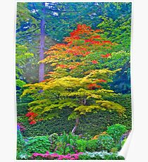Fall Tree & Flowers, Butchart Gardens, BC Poster