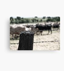 Herd of Cattle Canvas Print