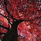 Looking Up, Red by MissElaineous Designs