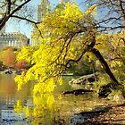 Autumn in Central Park, New York City by Alberto  DeJesus