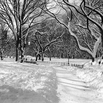Winter Wonderland, Central Park by biriart