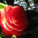 Heart of the Rose by MissElaineous Designs