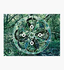 Milford Forest Sacred Geometry Photographic Print