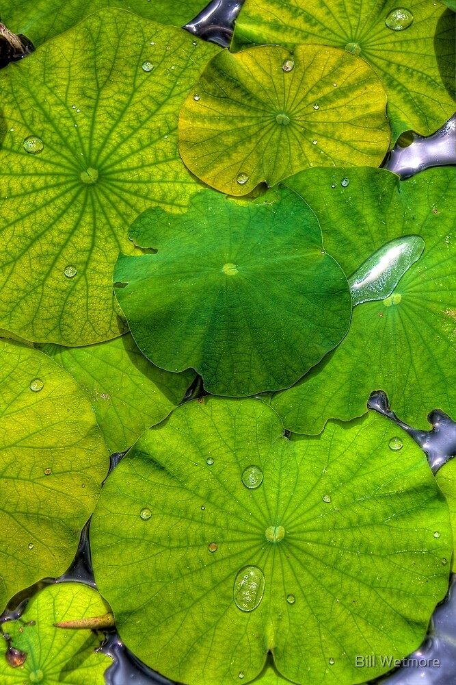 lily pads by Bill Wetmore