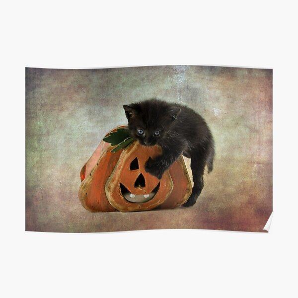 Halloween Blacky  Poster