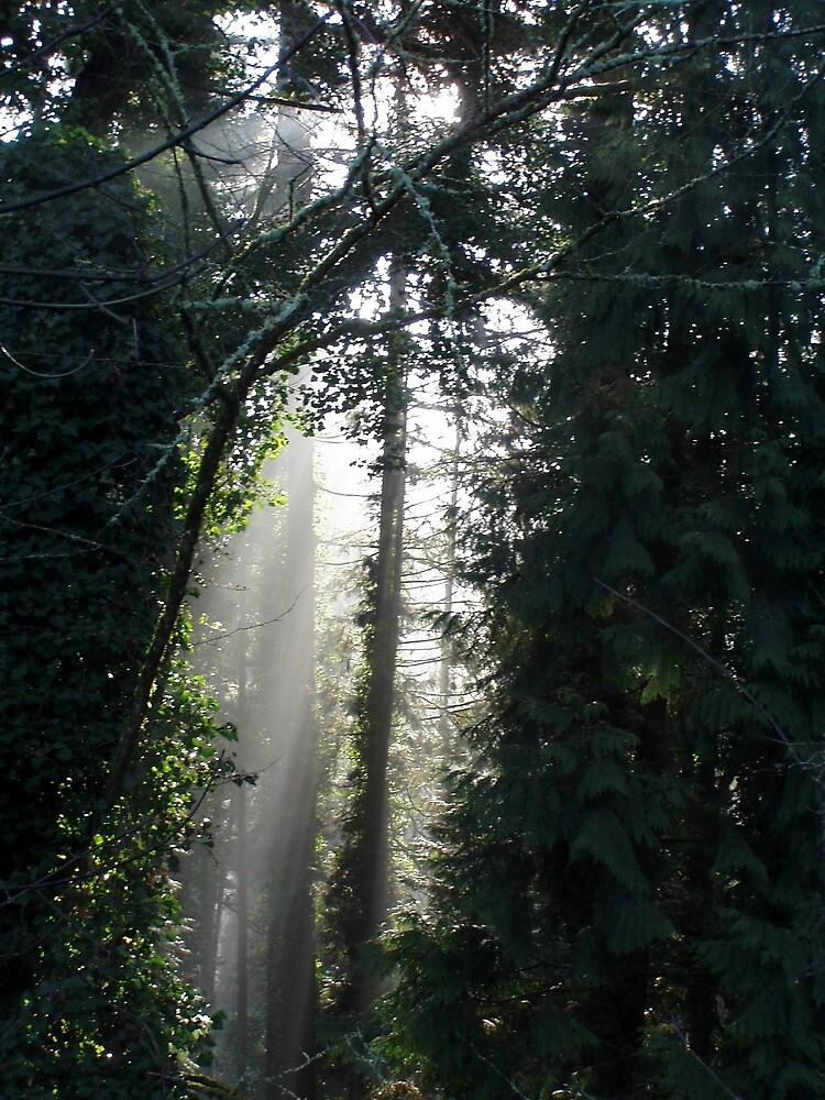 Early Morning Sun Rays #7 by Dawna Morton
