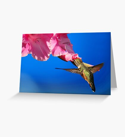 THE FLIGHT OF THE HUMMINGBIRD Greeting Card