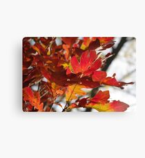 Oak Glow - Autumn Colors Canvas Print