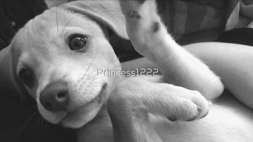 Brand new Puppy by Princess1222