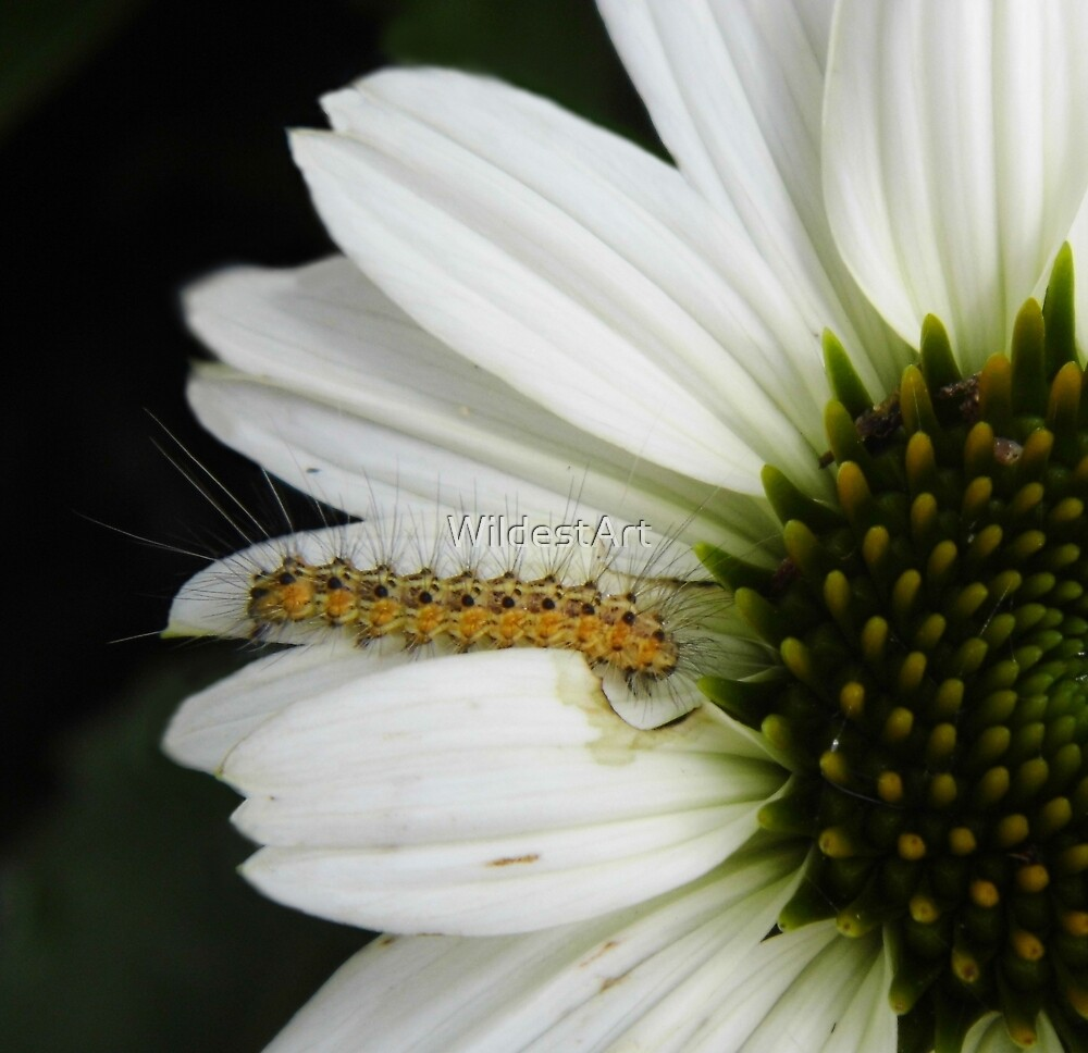 The Worm On The Coneflower by WildestArt