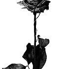 Blackbear by emodreamer13